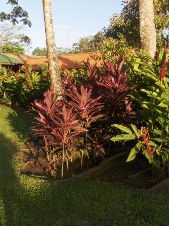 Costa Rica: héliconias et autres