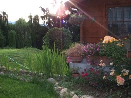 mon jardin en juin 2008