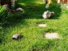 tortue 009 chat comp.jpg