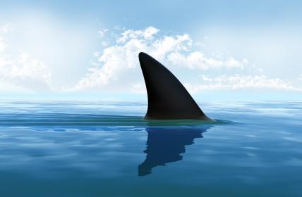 requin -.jpg