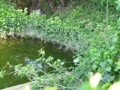 tortue d'eau 005 bassin comp.jpg